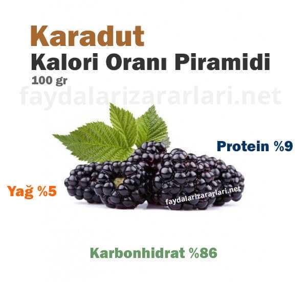 Karadut Kalori