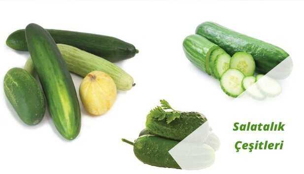Salatalık Türleri