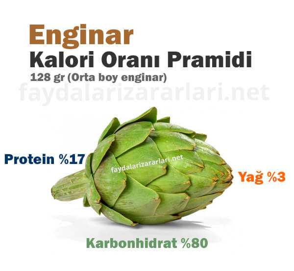 Enginar Kalori Piramidi